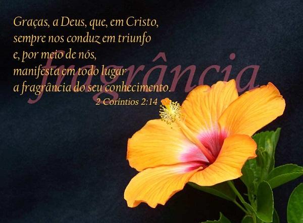 2da Corintios 2-14 - pensamiento del dia