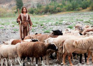 pastoreio-davi