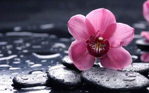 10-Imagenes-de-Flores-Full-HD_Fotos-de-Flores-Fotoblogx_08