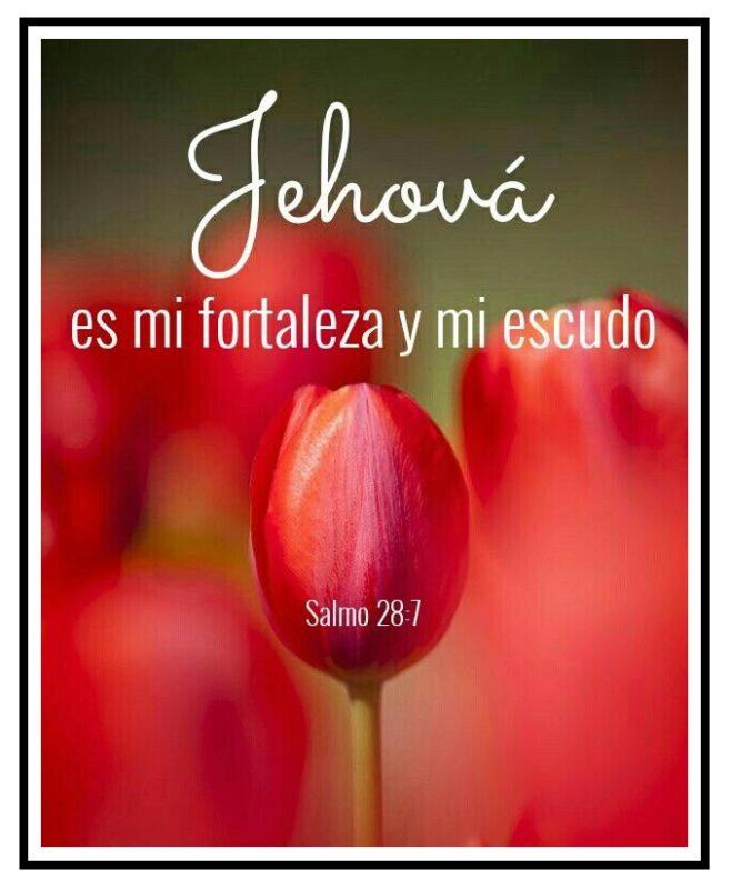 Jehova-es-mi-fortaleza-y-mi-escudo versiculo biblico.jpg